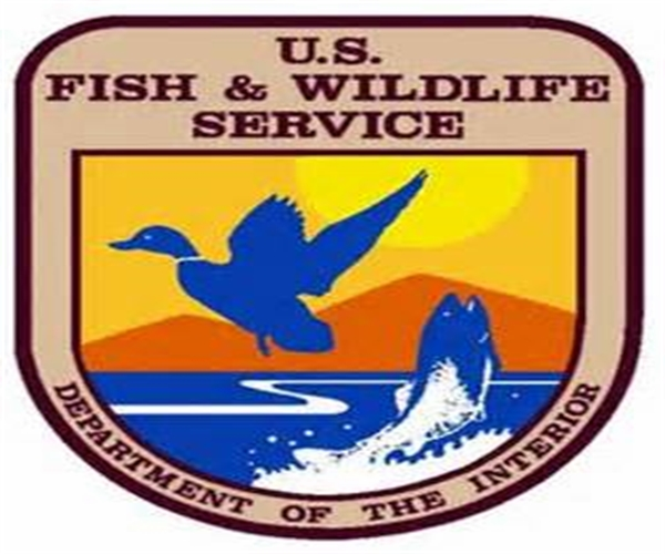 u s fish and wildlife service The us fish and wildlife service's plans to lift the endangered species act status of grizzly bears (ursus arctos horribilis) of the greater yellowstone.